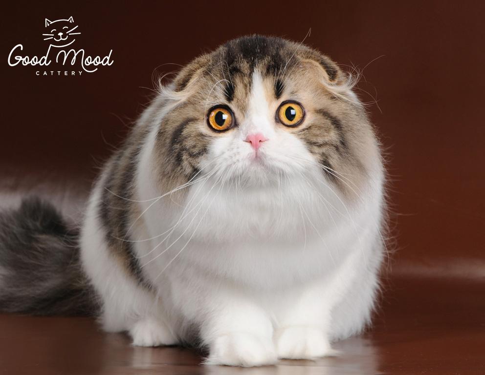 Wcf коты